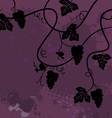Bunch of grapes plant background vector image