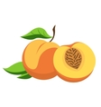 Peach and cut vector image vector image