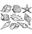 set with seashells and starfish sea mollusk vector image