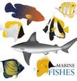 01 marine fish-01 vector image vector image