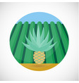 agave heart flat icon farm field background vector image vector image