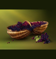 bascket with grapes vector image