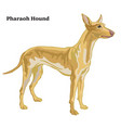 colored decorative standing portrait of pharaoh vector image vector image