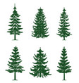 green pine trees collection vector image