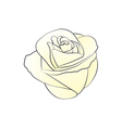 Rose White vector image vector image