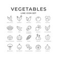 set line icons vegetables vector image