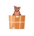 cat in box in a cardboard box kitty vector image