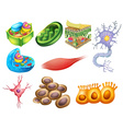 Different biology cells vector image vector image