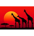 African Safari at Sunset vector image vector image