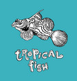 tropical fish - hand drawing vector image vector image
