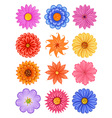various colorful flower vector image vector image