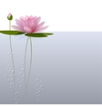 waterlily on the water vector image