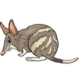 bandicoot animal cartoon vector image vector image