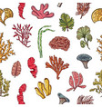 hand drawn seaweed elements pattern vector image vector image