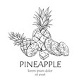 pineapple fruit banner sketch with copy space vector image vector image