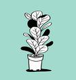 Plant and Pot vector image vector image