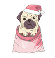 portrait of cute french bulldog in red christmas vector image