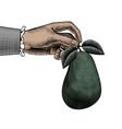 a hand holding a ripe avocado vector image vector image