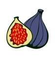 Hand drawn figs Eco food vector image vector image