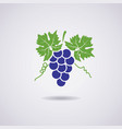 icon of grapes vector image vector image