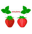ripe juicy strawberry on a white background vector image