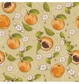 Apricot pattern vector image vector image
