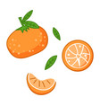 fresh tangerines with green leaves vector image