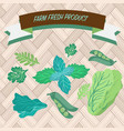 green culinary herbs coriander green peas vector image