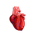 human heart internal organ anatomy vector image