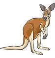 kangaroo animal cartoon vector image