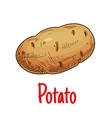 Potato tuber vegetable sketch icon vector image vector image