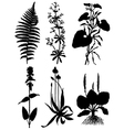 Collection of silhouettes of plants vector image vector image