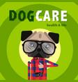dog care concept design pet shop dog shop vector image vector image