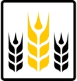 isolated wheat and darnel symbol vector image vector image