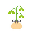 sprout in bag flat icon planting tree vector image vector image