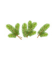 set of realistic detailed christmas tree branches vector image
