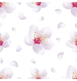 Spring background seamless pattern with sakura vector image vector image