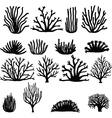 hand drawn coral vector image vector image