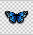 realistic butterfly icon vector image vector image