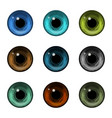 realistic detailed color human eyeballs or pupil vector image