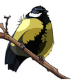 Bird titmouse sitting on a branch vector image vector image