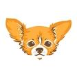 chihuahua dog vector image