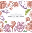 floral design with pastel viburnum hypericum vector image