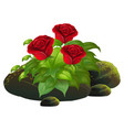 red roses and rocks on white background vector image vector image