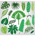 Tropical palm leavesbranches setSilhouetteGreen vector image vector image