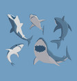 toothy swimming angry shark vector image