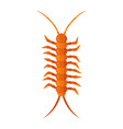 centipede insect vector image