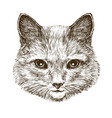 cute kitten cat pet animal sketch vintage vector image vector image