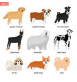 Dog breeds dogs breeding collection vector image