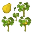 Planting and cultivation of yellow pear vector image